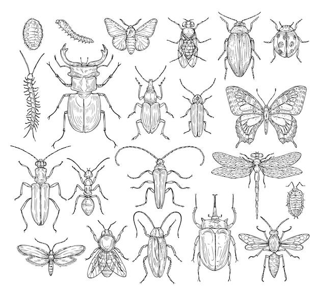 Schizzo di insetti
