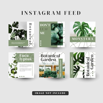 Storie di instagram feed template post