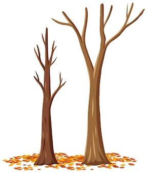 Albero di autunno isolato su priorità bassa bianca
