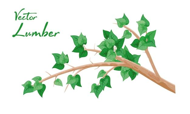 L'immagine di vettore del fumetto isolato mostra il ramo marrone con foglie di betulla verde su sfondo bianco
