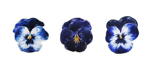 Fiori viola viola isolati in vettoriale