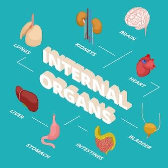 Concetto di anatomia isometrica. organi interni umani. 3d cervello cuore stomaco polmoni reni