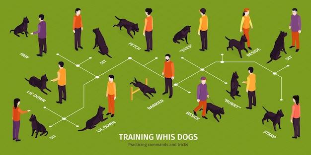 Infografica isometrica di addestramento del cane con diagramma di flusso di esercizi per cani con personaggi