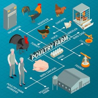 Illustrazione isometrica del diagramma di flusso dell'allevamento di pollame