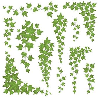Foglie verdi edera su rami pendenti. insieme rampicante di vettore della pianta della decorazione della parete isolato