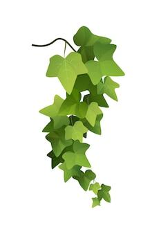Illustrazione del fumetto del ramo della pianta di edera. vite rampicante