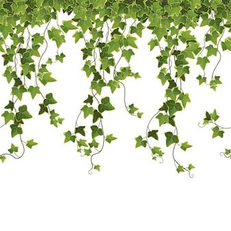 Priorità bassa dei rami della pianta dell'edera. vite rampicante.