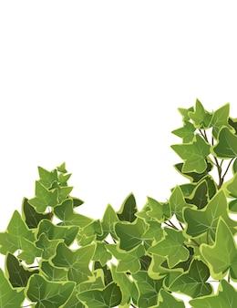 Fondo dei rami della pianta dell'edera. vite rampicante.