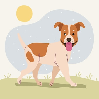 Jack russell nel campo