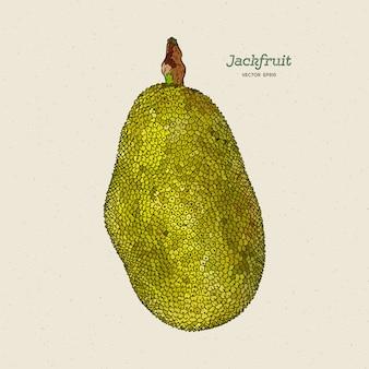 Il jackfruit, noto anche come albero di jack, schizzo di disegno a mano.