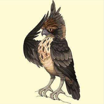 Illustrazione di falco giavanese