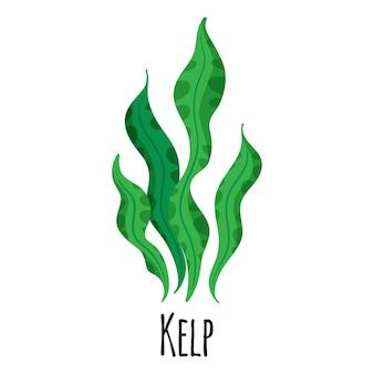 Alghe superfood kelp per il design, l'etichetta e l'imballaggio del mercato contadino del modello. alimento biologico proteico energetico naturale.