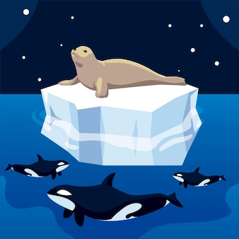 Sigillo di caccia della balena killer su iceberg, illustrazione del polo nord Vettore Premium