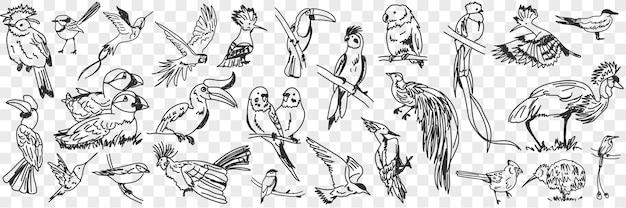 Tipi di uccelli doodle insieme
