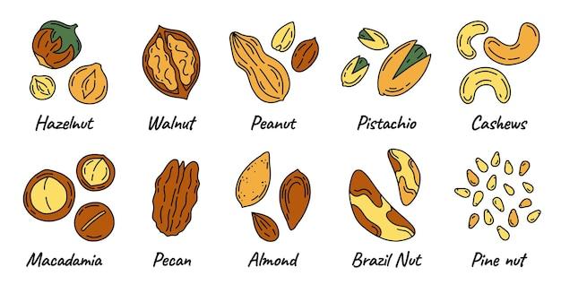 Tipi di noci e semi impostati nell'illustrazione di stile di doodle
