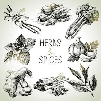 Erbe e spezie da cucina. icone di schizzo disegnato a mano