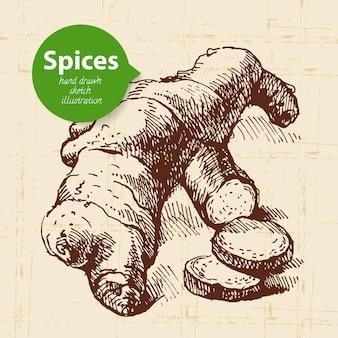 Erbe e spezie da cucina. sfondo vintage con zenzero schizzo disegnato a mano