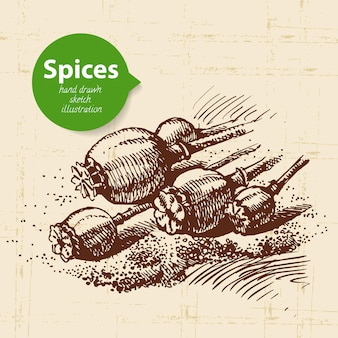Erbe e spezie da cucina. sfondo vintage con semi di papavero schizzo disegnato a mano