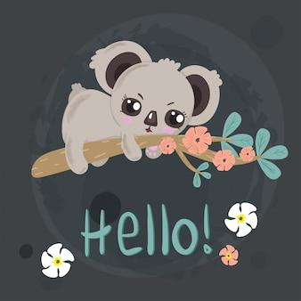 Koala piccola