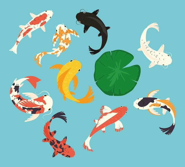 Collezione di icone di pesci koi