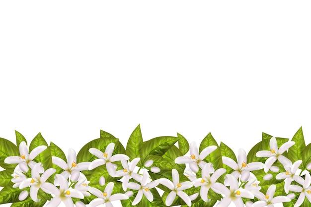 Etichette di prodotti cosmetici per la cura della pelle. illustrazione di vettore. ramo di fioritura arancione realistico, foglie, fiori di neroli.
