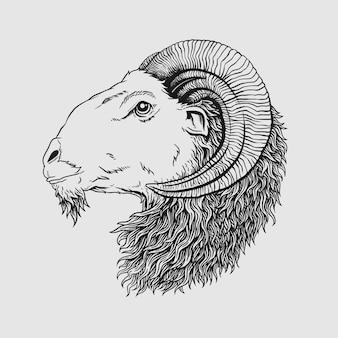 Linea skatech di agnello