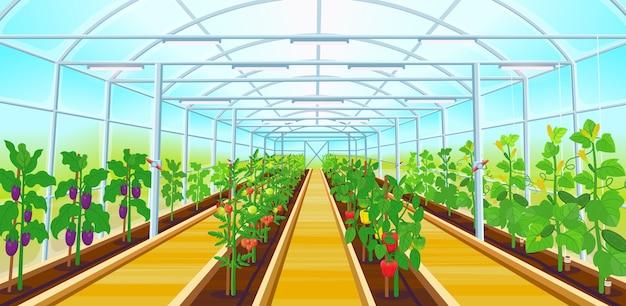 Una grande serra con file di peperoni, pomodori, cetrioli, melanzane.