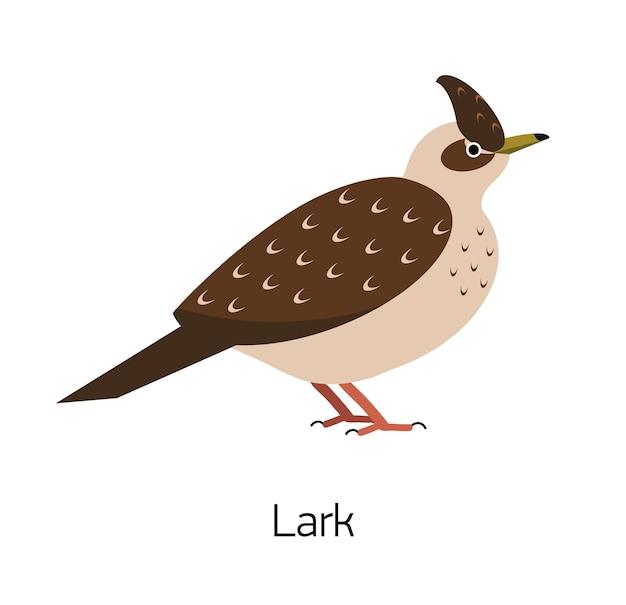 Allodola isolato su sfondo bianco. bellissimo uccello passeriforme della foresta, adorabile uccello canoro dei boschi. uccellino divertente. specie aviaria. illustrazione vettoriale colorato moderno in stile geometrico piatto alla moda.