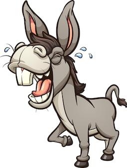 Ridere e ragliare asino grigio con grandi denti in prospettiva