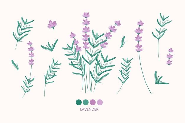Elementi di fiori di lavanda. illustrazione di erbe disegnate a mano. illustrazione botanica moderna
