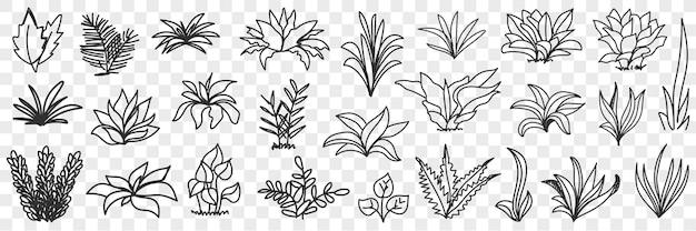 Mazzi di foglie sull'insieme di doodle del modello naturale della strada