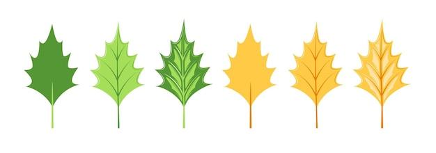 Raccolta di foglie isolata su sfondo bianco