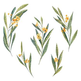 Foglie e fiori gialli, mimose, foglie botaniche e bacche in acquerello su uno sfondo bianco