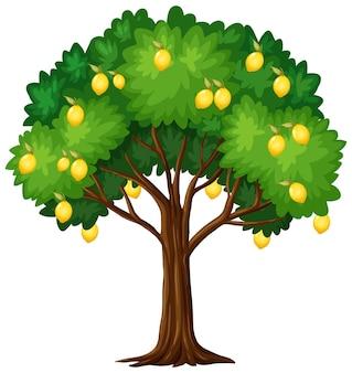 Albero di limone isolato su sfondo bianco