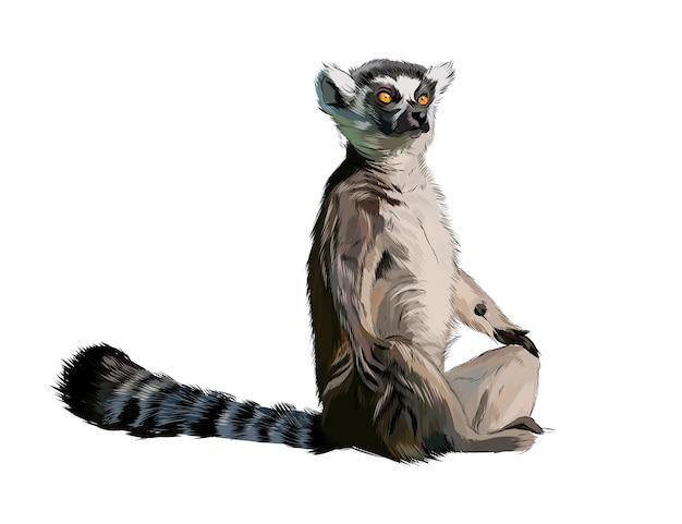 Lemure da una spruzzata di acquerello, disegno colorato