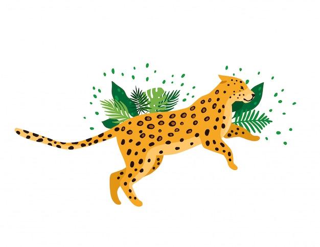 Leopardo isolato nella priorità bassa bianca