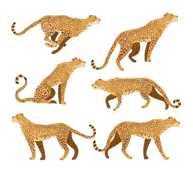 Leopardo. mammifero. stile piatto illustrazione.