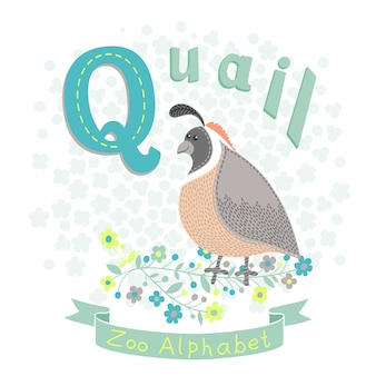 Lettera q - quaglie