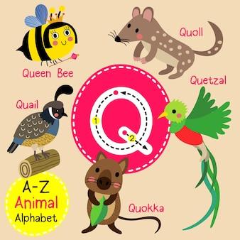 Alfabeto dello zoo q della lettera q.
