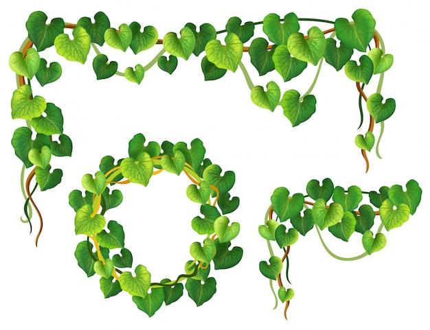 Ramo e cornice di foglie di liana.
