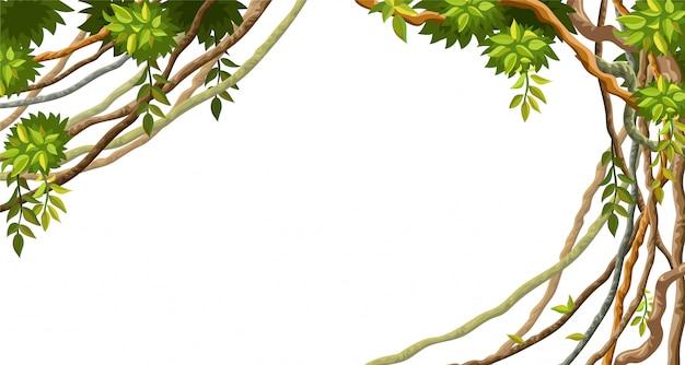 Rami e foglie di liana.