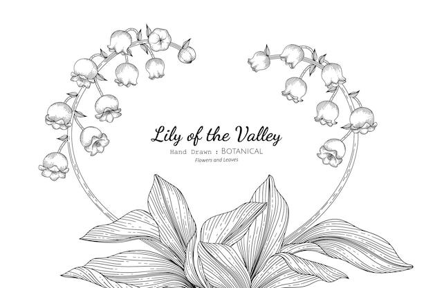 Illustrazione botanica disegnata a mano di fiori e foglie di mughetto con line art.