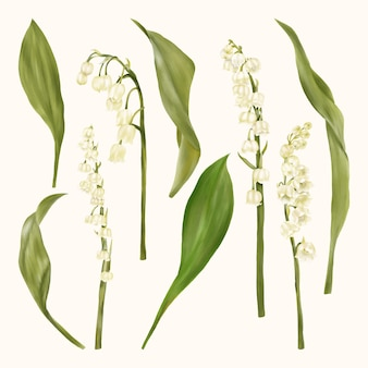 Lily of the valley fiori bianchi