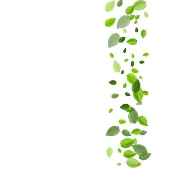 Manifesto di vettore dell'albero di lime verdi. illustrazione di foglie che cadono. concetto di movimento del fogliame della foresta. bordo organico foglia.