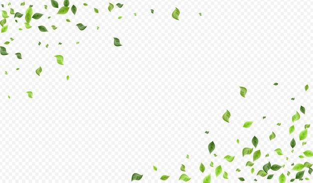 Foglie di lime che volano vettore sfondo trasparente poster. disegno del fogliame che cade. concetto di vento foglia di foresta. brochure sulla mosca del verde.