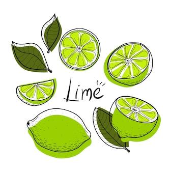 Set di lime fetta di lime mezza intera e foglie colorate collezione di agrumi astratti