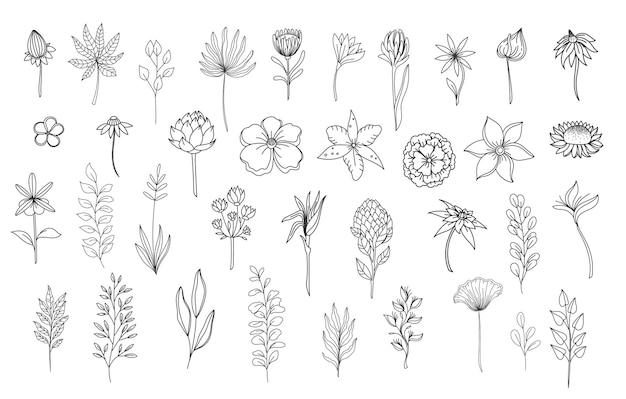 Elementi floreali di linea arte. delineare le erbe delle foglie naturali del fogliame. impostare l'illustrazione botanica di vettore del fiore disegnato a mano.