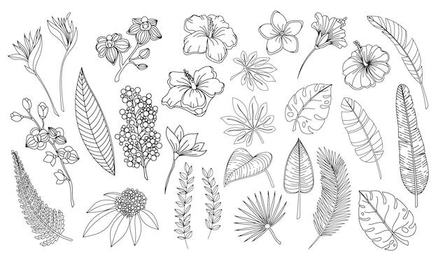 Line art foglie e fiori tropicali. delinea le foglie hawaiane della felce di monstera della palma della foresta, l'orchidea, l'ibisco, il fiore di plumeria. illustrazione di vettore di elementi tropicali della pianta disegnata a mano.