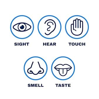 Icona linea set di cinque sensi umani. Vettore Premium