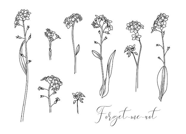 Illustrazione lineare di fiori di bosco isolati su sfondo bianco